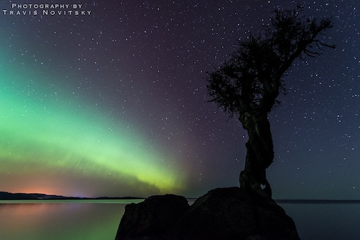 """Ancient Cedar Aurora,"" by Travis Novitsky."