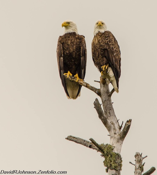 """""""Two for one: Mated Pair"""" by David Johnson."""