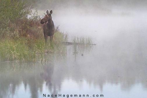 Nace Hagemann captured this wonderful image on a foggy morning recently.