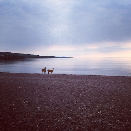 """Deer on Lake Superior"" by Tara Block."