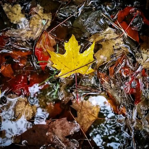 "Kjersti Vick calls this ""Crisp fall rain puddles need no filter. Happy Fall Equinox."""