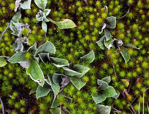 Mary Amerman took this gorgeous photo of mosses and plants at Hawk Ridge in Duluth recently.