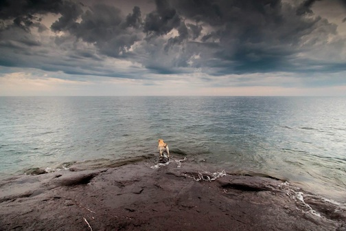 Dog Plus Storm by Thomas Spence.