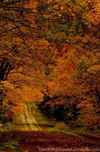 """Fall Splendor"" by David Johnson."