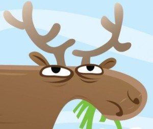 It's Moose Madness weekend in Grand Marais.