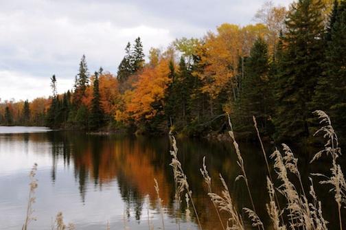 """Fall Color"" by Sandra Updyke."