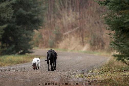 """Old Friends"" by Nace Hagemann."