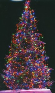 The tree at Last Chance Gallery will be lit at 6 p.m. Saturday.