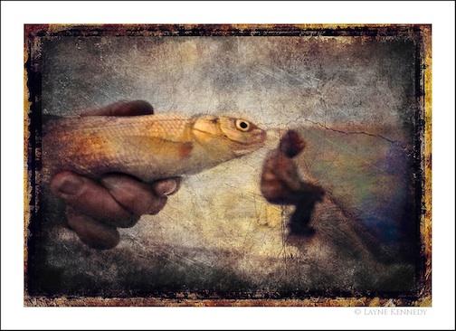 Fishing by Layne Kennedy.