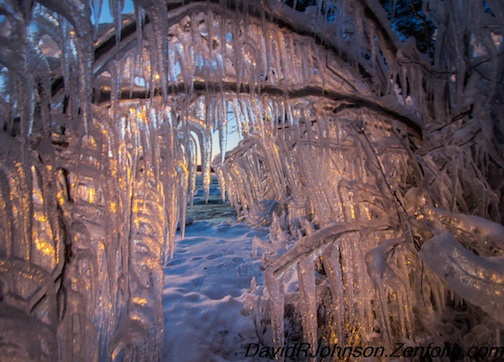 Icicle Forest by David Johnson.