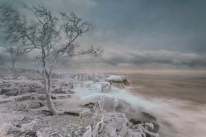 john Gregor Frosty tree