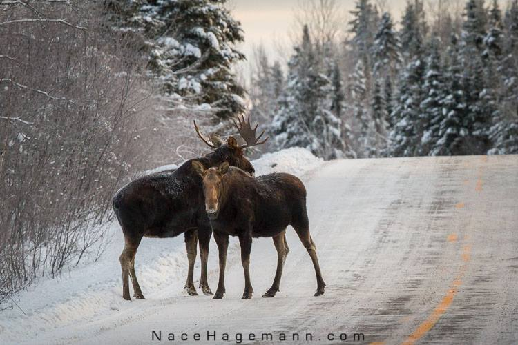 Nace Hagemann caught this touching shot on the Gunflint Trail the other day.