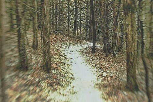 """A Walk in the Woods"" by Justin Vrba."