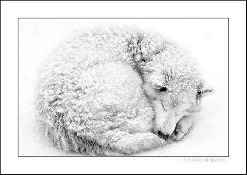 """Never Underestimate a Good Snooze"" by Layne Kennedy."