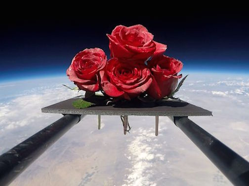 Roses in Space.