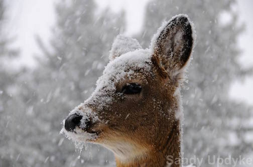 April Snow by Sandra Updyke.