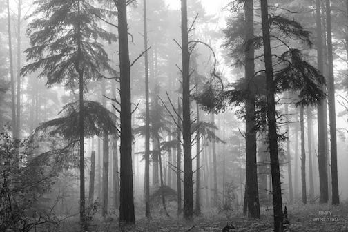 Mary Amerman took this lovely shot. Her comment: Spent some quality time in the foggy Northwoods.""