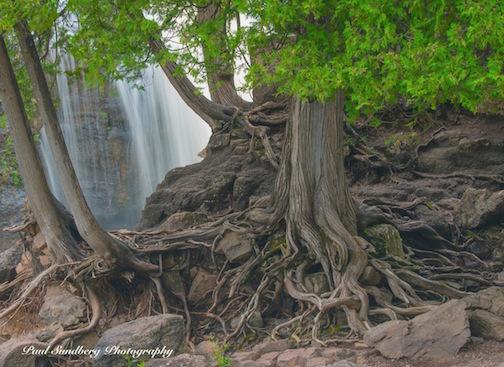 Cedar Roots by Paul Sundberg.