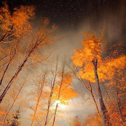 Golden Trees by Jeffre Nicke.