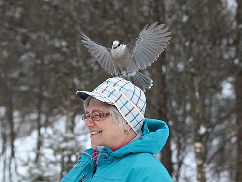 Paula Sundberg and a friendly Gray Jay. Photo by David Brislance.