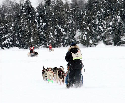 The John Beargrease Sled Dog Marathon starts on Sunday from Duluth. Photo by John Sumner.