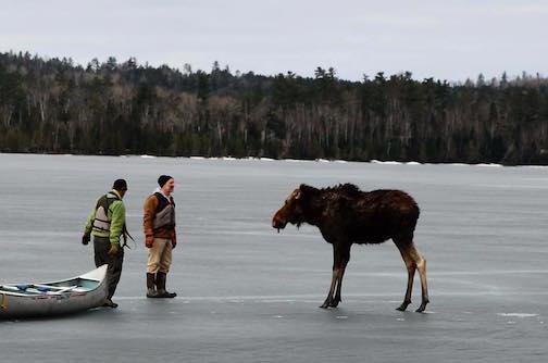 Nancy Seaton Moose Pic