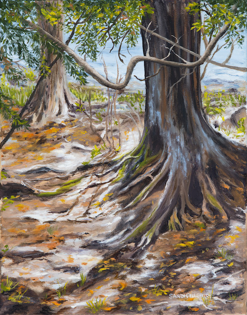 """Wise Cedars 2– Suagarloaf Cove, oil, by Sandi Pillsbury-Gredzens."