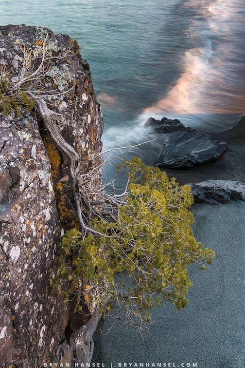 Upside-down tree by Bryan Hansel.
