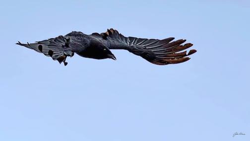 """As the Crow Flies,""  by John Heino."