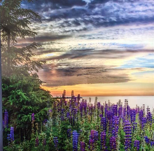 Lupine Sunset by Kirk Schleife is one of the photographs that will be in the Frozen Photographers show which opens at the Johnson Heritage Post on Friday.