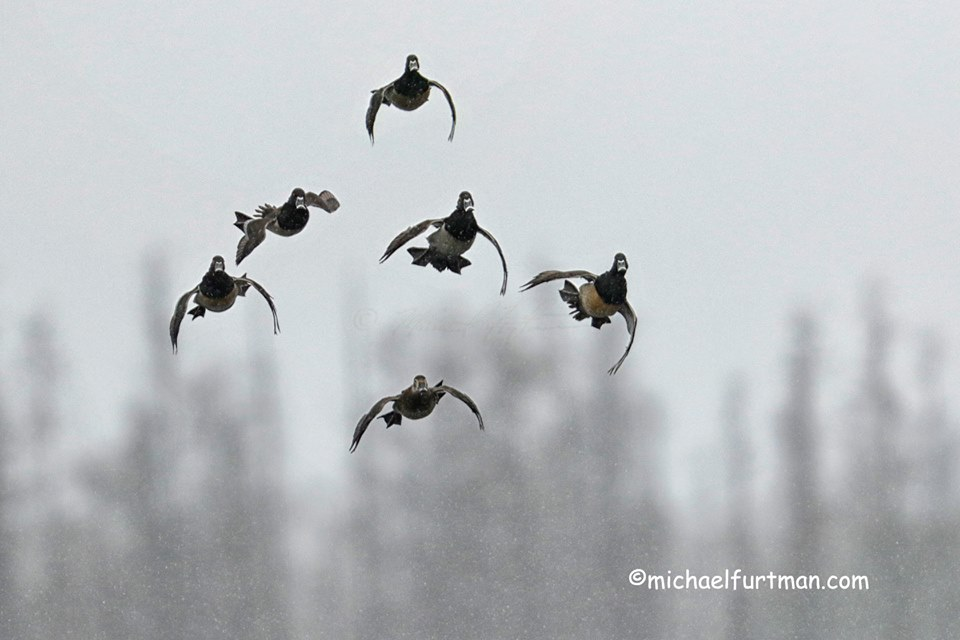 """Landing Formation"" by Michael Furtman."