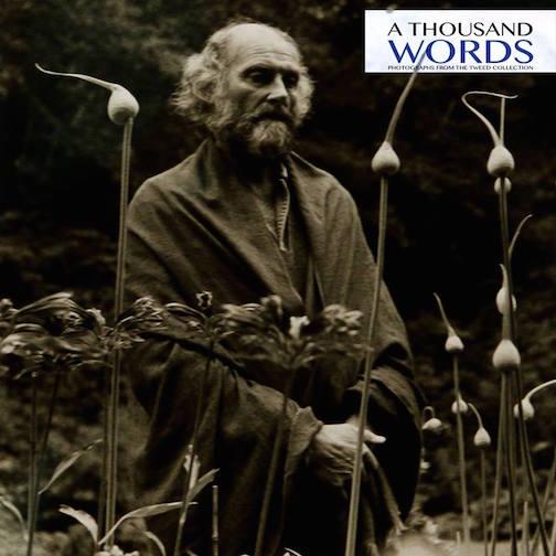 "(detail) Imogen Cunningham (American, 1883-1976) ""Morris Graves in Leek Garden,"" 1973 Gelatin silver print."