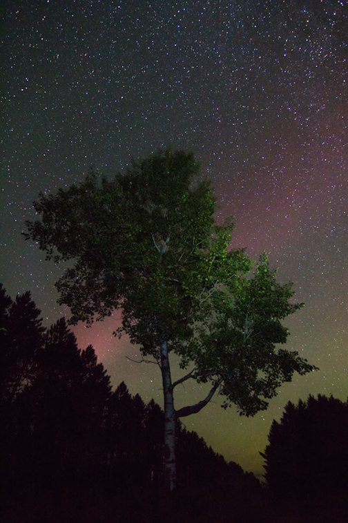 A happy little tree along the Sawbill Trail with a touch of northern lights by Thomas Spence.