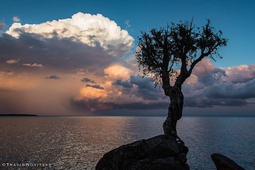 Summer Storm and the Spirit Tree by Travis Novitsky.