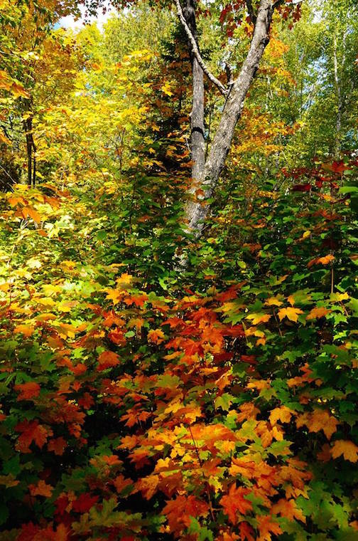 Sandra updyke fall scene