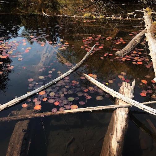 Boggy Lake by Kristopher Bowman.