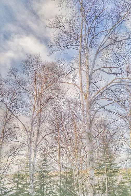 Soft colors by Don Davison.