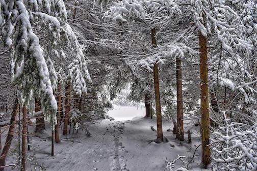 Snow day in Thunder Bay by Joan Berezowski.