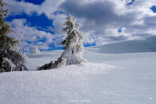 """""""Frozen on the Shore"""" by Sandra Updyke."""