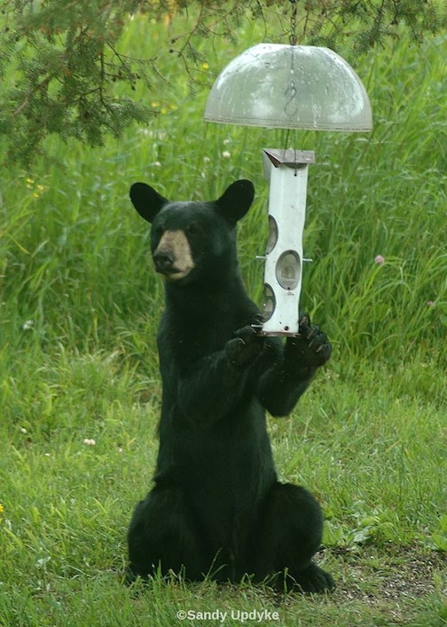 """Bears are Up,"" by Sandra Updyke."