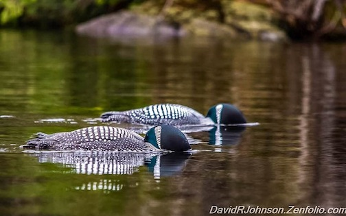 Synchronized Swimming by David Johnson.