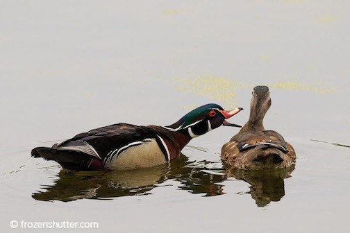 I had to duck out of Anger Management classes because they were led by some quack by Gary Jake Jacobson.