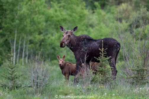 Mom and her youngster by Nace Hagemann.