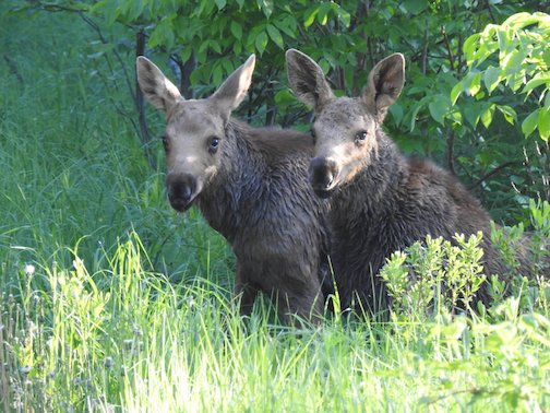 Twinsies! Photo courtesy of Trail Center Lodge.