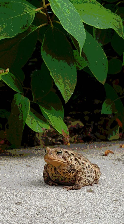 My yard toad ty Waven Wind.