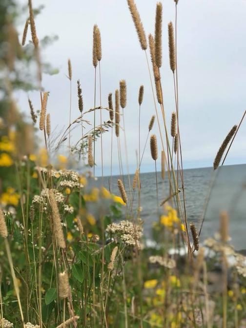 Grasses and the lake by Deb Moon Akason.
