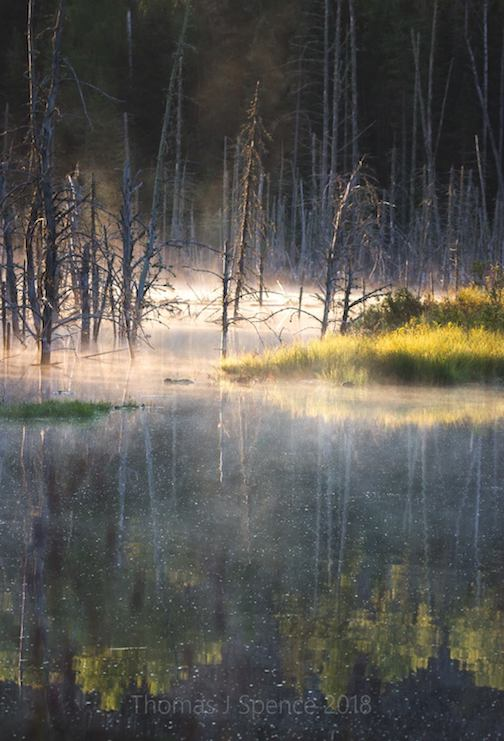 Morning magic on the beaver pond by Thomas Spence.