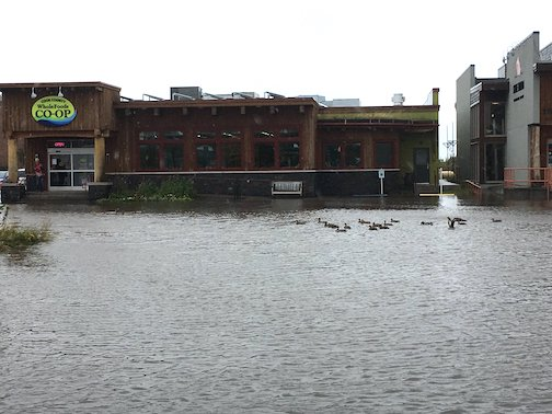 Ducks get the best parking spots at the Cook County Whole Foods Co-op by Pamela Louwagie.