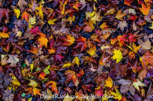 Forest floor color by David Johnson.