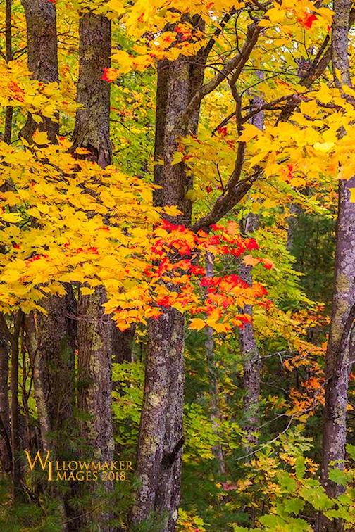 Last of fall by Jamie Rabold.